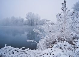 winter landscape water trees snow vegetation