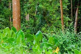 jungle vegetation tropical forest