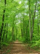 forest nature trees background may