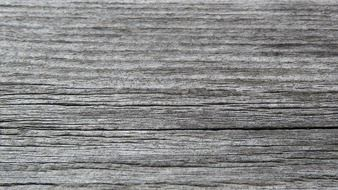 grey old wood texture