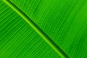 nature pattern green color leaf macro