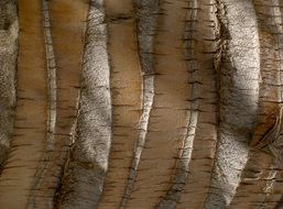 palm tree root structure wood