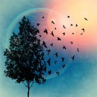 silhouette of a tree and flying birds