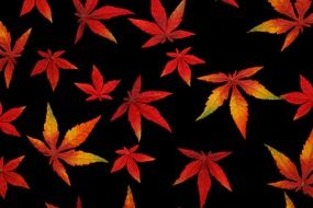 Bright autumn leaves on a black background