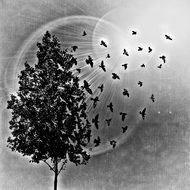 black and white drawing of a tree and flying birds