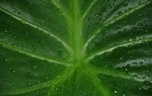 Photo of wet leaf closeup
