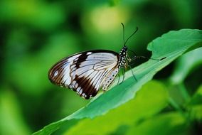 brown white butterfly on the green leaf