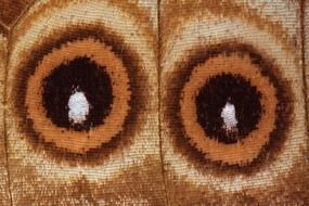 eyes of exotic south america butterfly