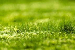 blurred green meadow grass