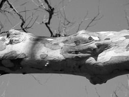 tree limb branch texture animal