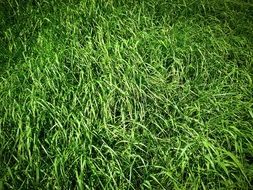 grass in a meadow
