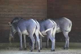 zebras stall in a zoo