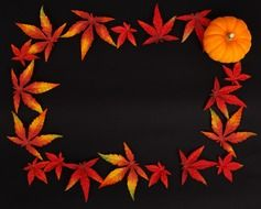 pumpkin and autumn leaves on a black background