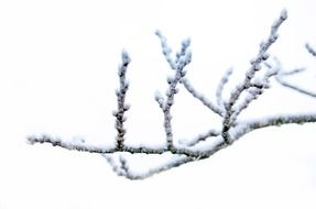tree branch in winter