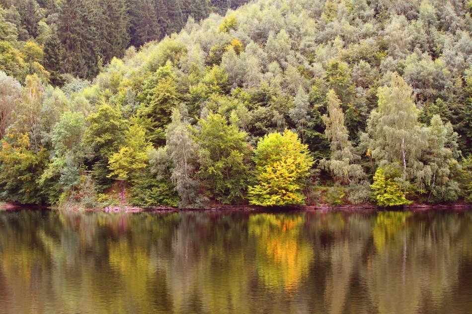 landscape of autumn forest and lake