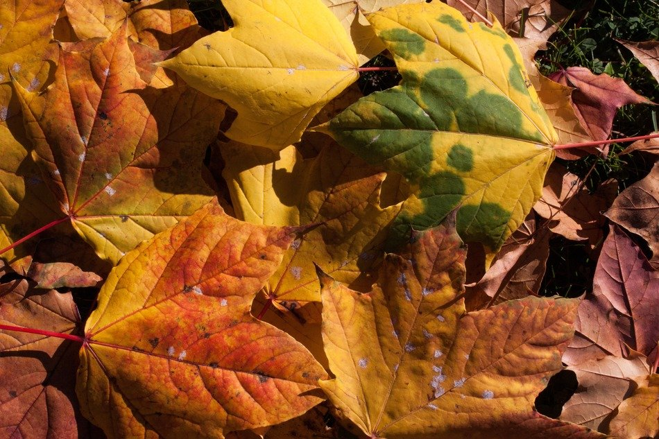 colorful autumn leaves fallen down