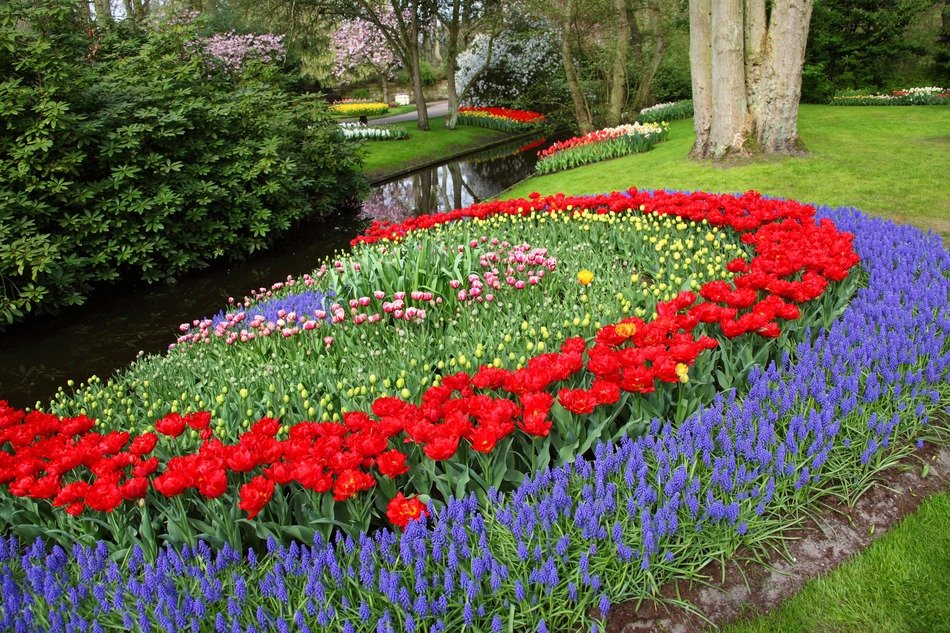 garden in holland colorful flowers tulips