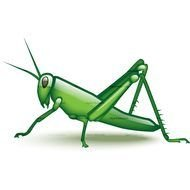 Cartoon Grasshopper drawing