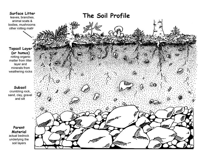 Soil Layers Diagram Worksheet Free Image