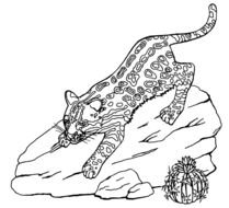 Ocelot Coloring Page Easy
