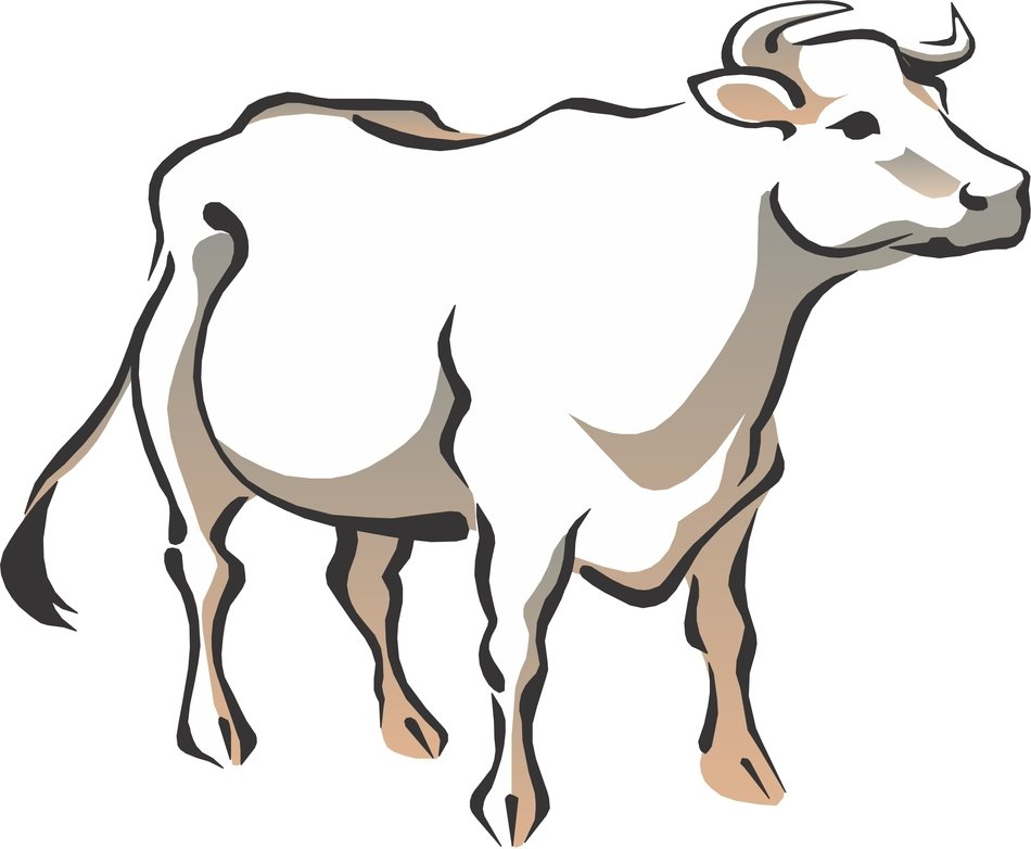 Colorful cow drawing clipart