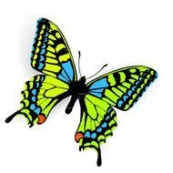 green Butterfly Clip Art drawing