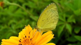 butterfly on the yellow flower in summer