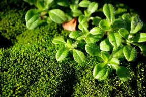 moss and green plant
