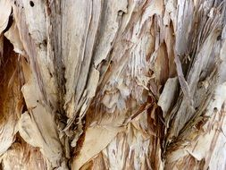 bark texture pattern tree nature