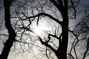sun beams bursting through crowns of bare trees