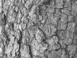 tree bark rough texture