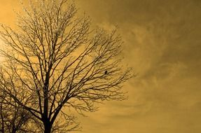yellow sky and frozen tree