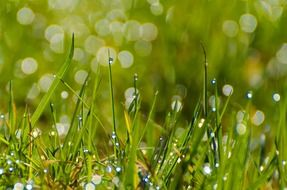 wet meadow grass