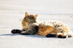 adorable cat lying on the road