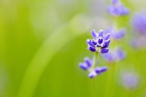 blurred background with spring purple flowers