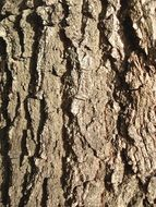 background with brown tree bark
