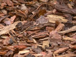 bark mulch wood snippets background