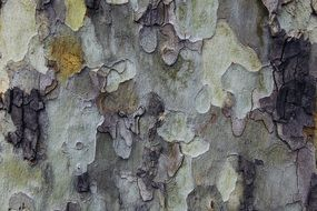 camouflage tree bark background