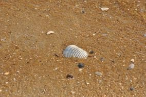 shell on the wet sand