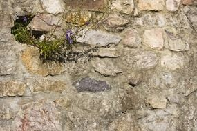 flowering plant on the stone wall