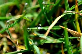 drop water grass macro rain
