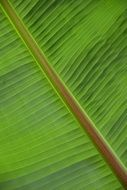palm leaf structure plant green