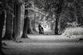woman with baby carriage in a park