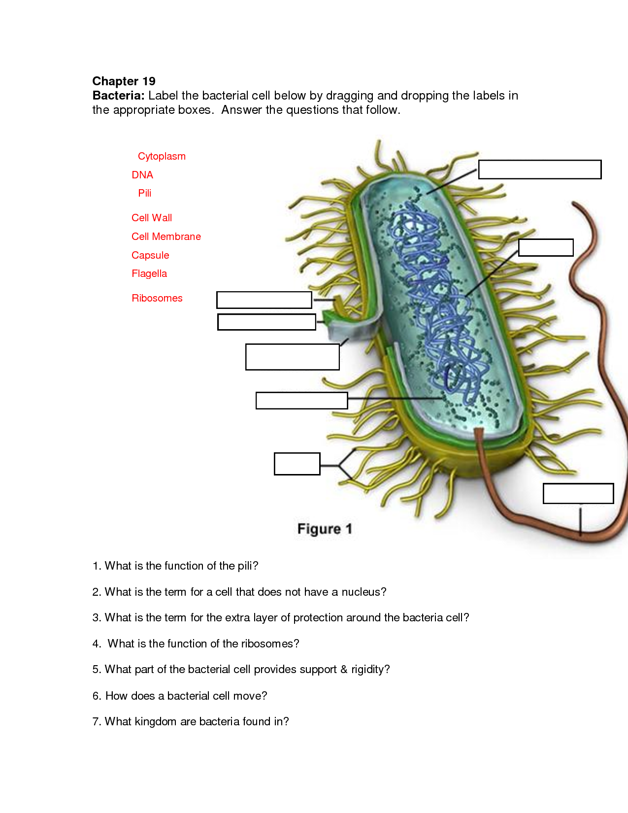 Bacteria cell diagram with labels free image bacteria cell diagram with labels ccuart Image collections