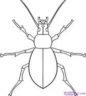 black and white picture of a pine beetle
