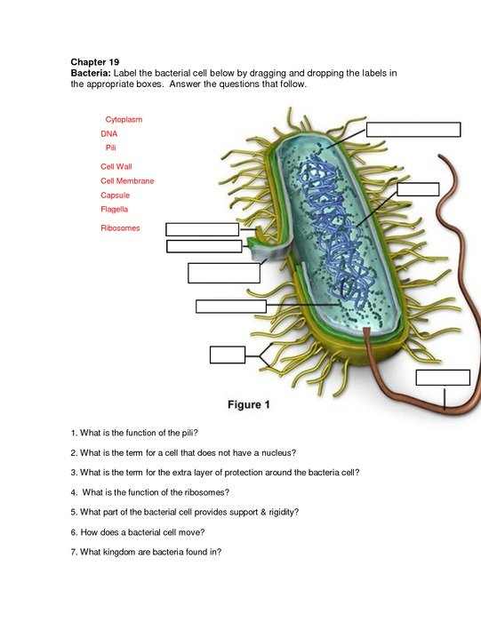 Clipart of Bacteria Cell Diagram