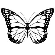 black and white picture of a butterfly