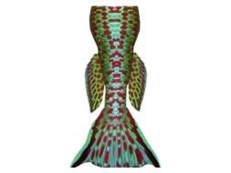 Mermaid Tail as a graphic illustration