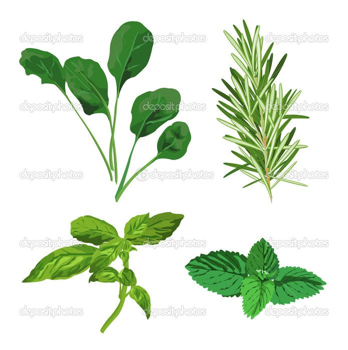 Different green herbs clipart