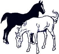 drawn black and white horses